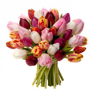 bouquet-de-tulipes