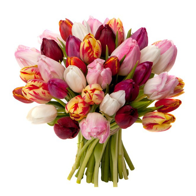 Fleurs tulipes for Bouquet de tulipes