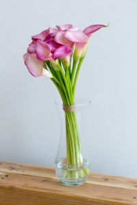 Bunch of pink callas in the vase on black background